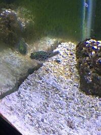 ImageUploadedByFish Lore Aquarium Fish Forum1460224090.508938.jpg