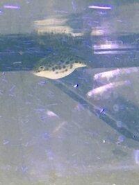ImageUploadedByFish Lore Aquarium Fish Forum1460224140.877682.jpg