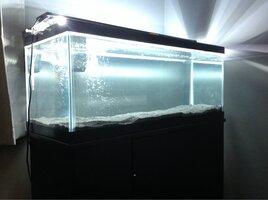 ImageUploadedByFish Lore Aquarium Fish Forum1460596576.999288.jpg