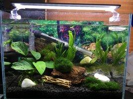 ImageUploadedByFish Lore Aquarium Fish Forum1468439892.174205.jpg