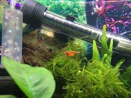 ImageUploadedByFish Lore Aquarium Fish Forum1468439914.693565.jpg