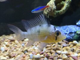 ImageUploadedByFish Lore Aquarium Fish Forum1468776591.314643.jpg