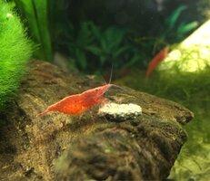 ImageUploadedByFish Lore Aquarium Fish Forum1469649144.711014.jpg