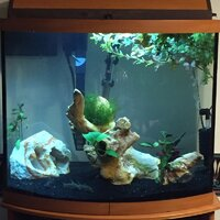 ImageUploadedByFish Lore Aquarium Fish Forum1471139273.972828.jpg