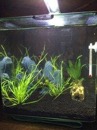 ImageUploadedByFish Lore Aquarium Fish Forum1471875138.587750.jpg