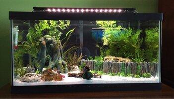 ImageUploadedByFish Lore Aquarium Fish Forum1471875170.602545.jpg