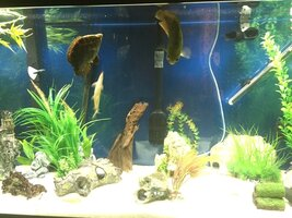 ImageUploadedByFish Lore Aquarium Fish Forum1473035711.175281.jpg