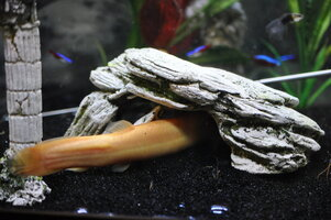 loach time out yetti 4-13-16.jpg