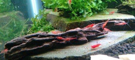 Red Cherry on Driftwood.jpg