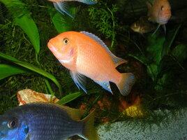 rsz_fish1_006.jpg