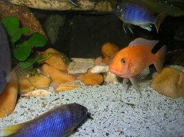 rsz_fish1_031.jpg