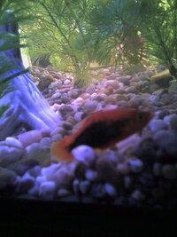 fish 1.JPG