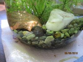 added snail shell.JPG