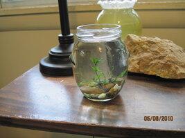 new jar best.JPG