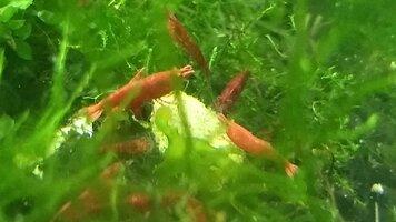 Shrimp Feast Brussel Sprout.jpg