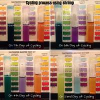 Cycling process using shrimp Photo 1.png