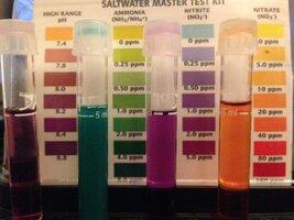 SaltWater Test Result on 13 day.JPG