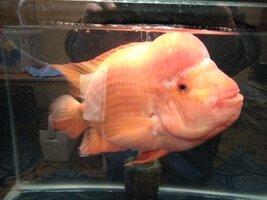 Misc Fish 3.jpg