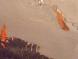 fishaaaaaaayz 035.jpg