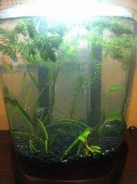 shrimp tank.jpg