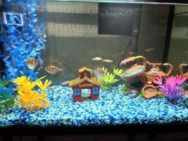 fishtank1.jpg