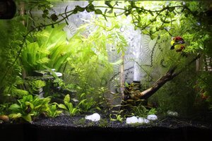 10g Blue Dream Shrimp Tank.JPG