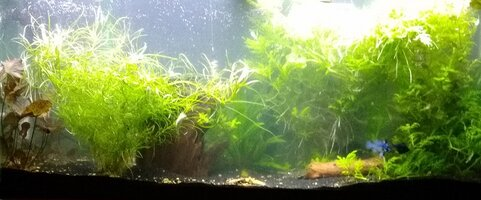 55g Planted Community with Discus 41920.jpg