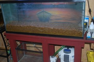55g dirted tank with water.jpg