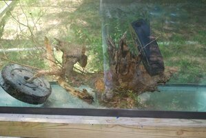 Tree Root System weighted in water.jpg