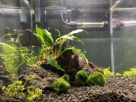 Shrimp Tank Week 2 (2).jpg