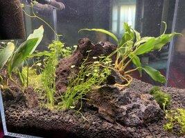 Shrimp Tank Week 2 (4).jpg