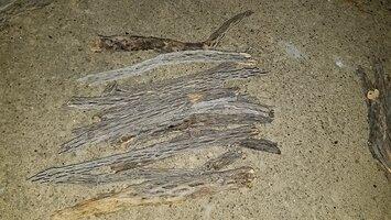 9-10 inch pieces of cholla wood.jpg
