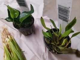 Hex Plants3.jpg