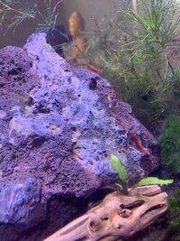 Baby Shrimp.jpg