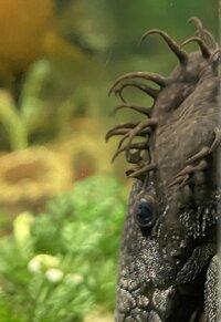 rhino11.jpeg