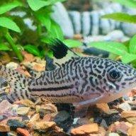 Fishy McGee