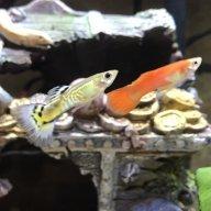FishyJ