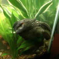 Fluval Bio Max Replacement Aquarium Filter Forum 274956