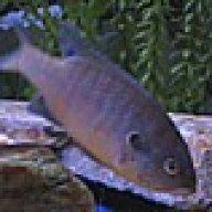 lilFishyfish