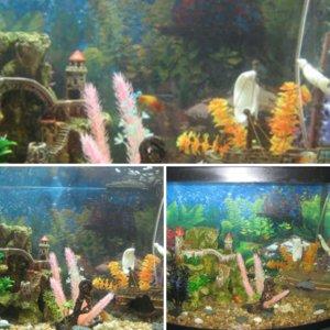 my tank :)