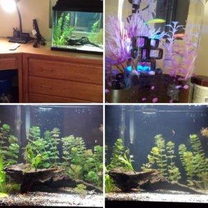 Fish Tank Start to Finish