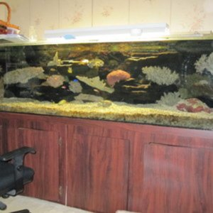 240 gal saltwater tank