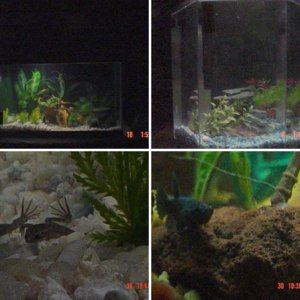 fish and tanks