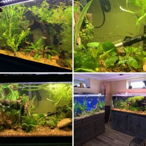 Inhabitants of my new tank