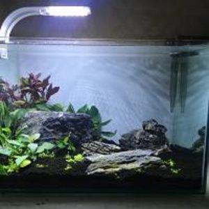 10 Gallon Planted Aquarium