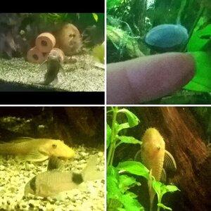 Meet My Fishies!