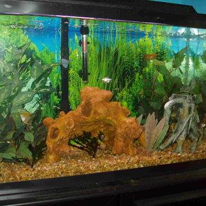 29 Gallon Freshwater Tank