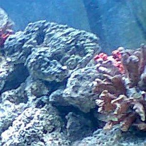 My_fish_tank_from_corner
