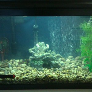2nd 20 Gallon tank (not populated)
