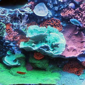 120 Gallon Reef Tank - August 2013